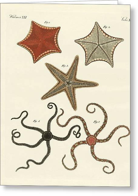 Star Fish Drawings Greeting Cards - Different kinds of starfish Greeting Card by Splendid Art Prints