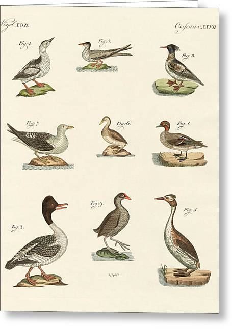 Tern Drawings Greeting Cards - Different kinds of waterbirds Greeting Card by Splendid Art Prints