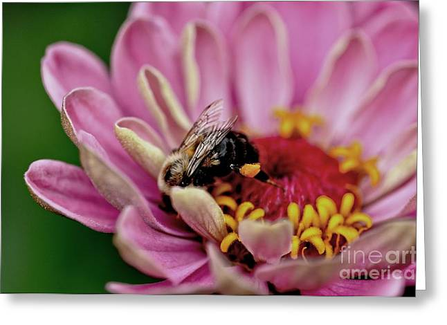 Zinnia Elegans Greeting Cards - Digging In Greeting Card by Chris Fleming