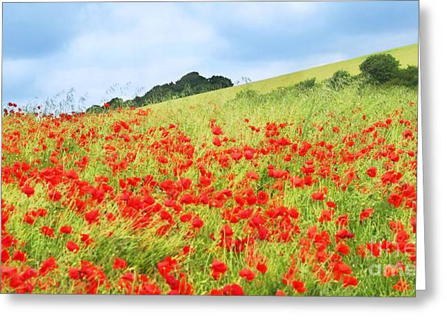 Nature Study Digital Greeting Cards - Digital Art Field of Poppies Greeting Card by Natalie Kinnear