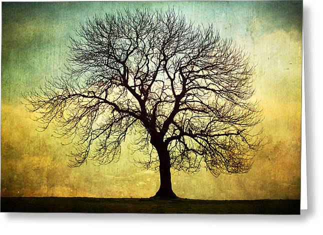 Nature Study Digital Greeting Cards - Digital Art Tree Silhouette Greeting Card by Natalie Kinnear