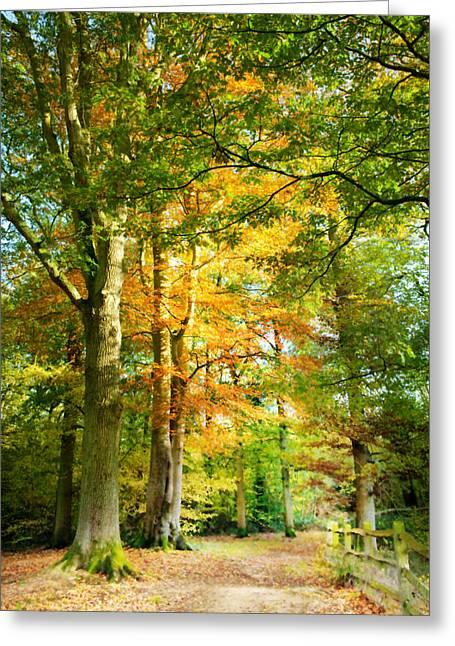 Autumn Photographs Digital Art Greeting Cards - Digital Art Woodland Pathway in Autumn Greeting Card by Natalie Kinnear