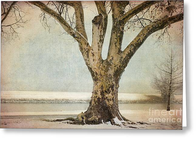 Snow Scene Digital Greeting Cards - Dignity Greeting Card by Betty LaRue