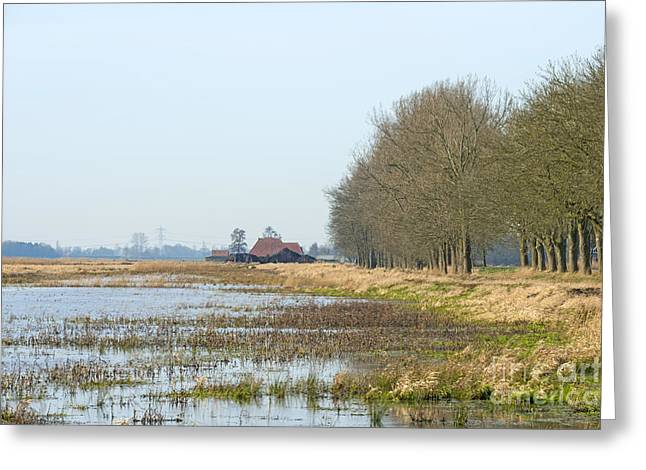 Reed Bed Greeting Cards - Dike along a marsh in winter Greeting Card by Jan Marijs