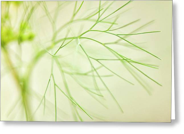 Dill (anethum Graveolens) Leaves Greeting Card by Maria Mosolova