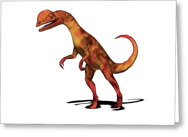 Dilophosaurus Dinosaur Greeting Card by Friedrich Saurer