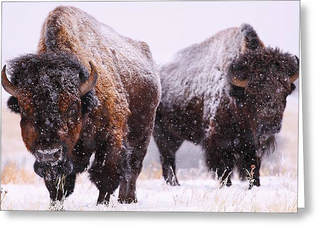 Recently Sold -  - Grazing Snow Greeting Cards - Dimensions  Greeting Card by Kadek Susanto