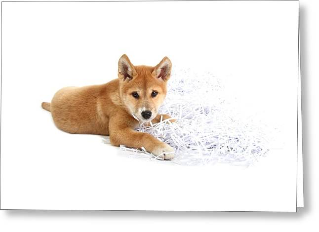 Dingo Puppy Greeting Card by Science Photo Library