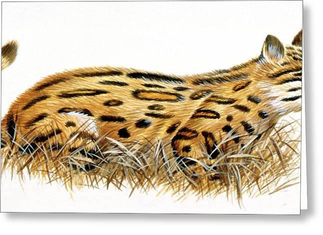 Dinictis Prehistoric Cat Greeting Card by Deagostini/uig
