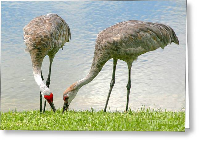 Dining Together Greeting Card by Sabrina L Ryan