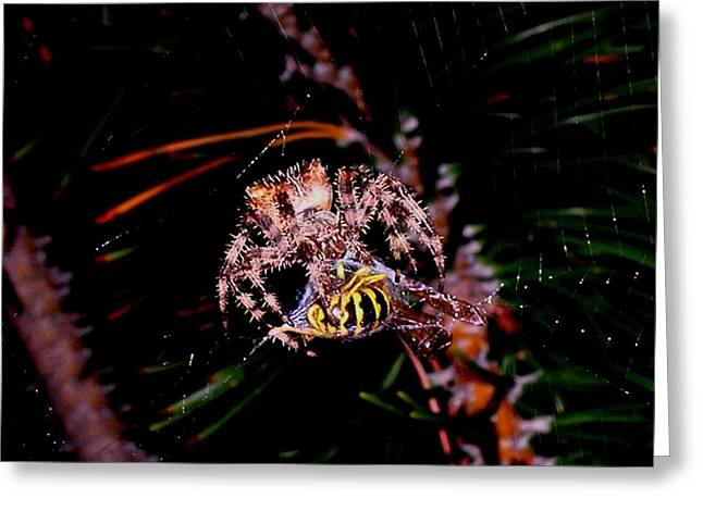 Spider Greeting Cards - Dinner Greeting Card by Joe Hamilton