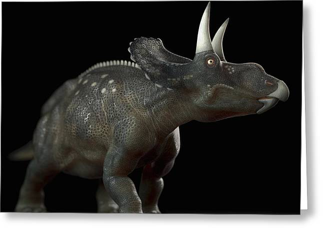 Extinction Greeting Cards - Dinosaur Diceratops Greeting Card by Science Picture Co