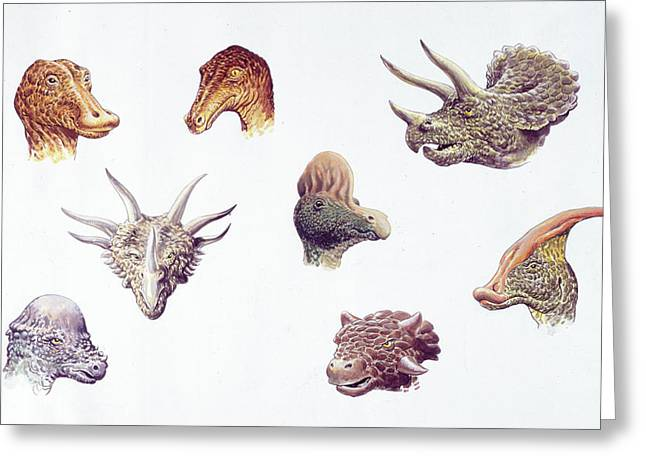 Dinosaur Heads Compared Greeting Card by Deagostini/uig