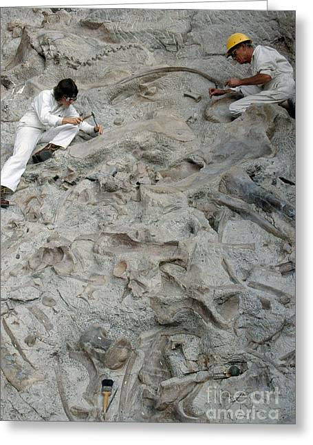 Excavations Greeting Cards - Dinosaur National Monument Park Greeting Card by James L. Amos