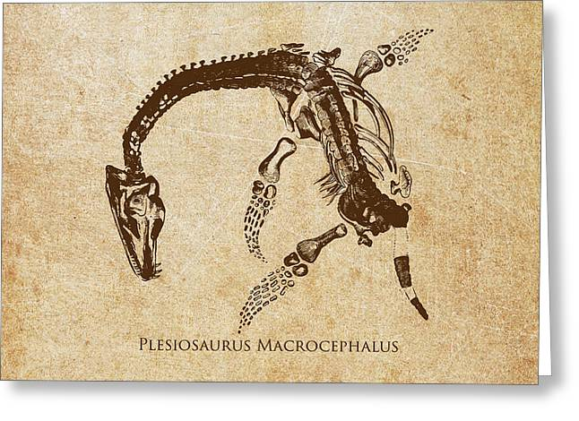 Dino Greeting Cards - Dinosaur Plesiosaurus Macrocephalus Greeting Card by Aged Pixel