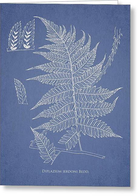 Fern Greeting Cards - Diplazium jerdoni Greeting Card by Aged Pixel