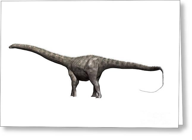 Diplodocus Digital Greeting Cards - Diplodocus Dinosaur Greeting Card by Nobumichi Tamura