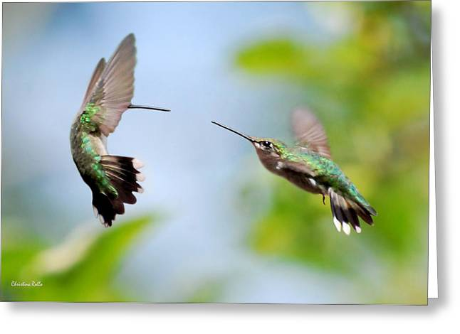 Kolibri Greeting Cards - Direct Confrontation Greeting Card by Christina Rollo