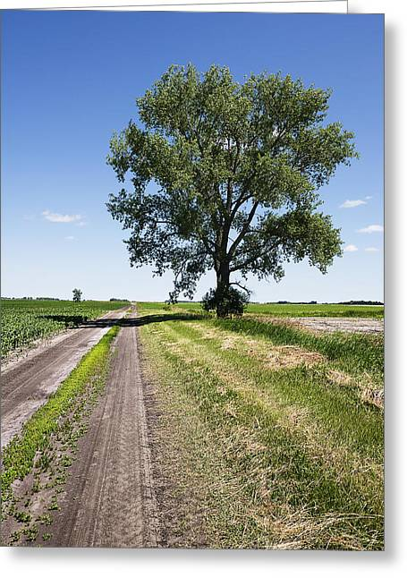 Country Dirt Roads Greeting Cards - Dirt Road And Cottonwood Tree Landscape Greeting Card by Donald  Erickson