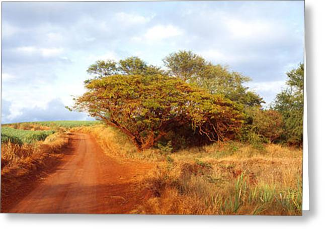 Dirt Image Greeting Cards - Dirt Road Passing Greeting Card by Panoramic Images
