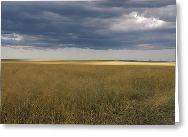 Rift Greeting Cards - Dirt Road Passing Through A Meadow Greeting Card by Panoramic Images
