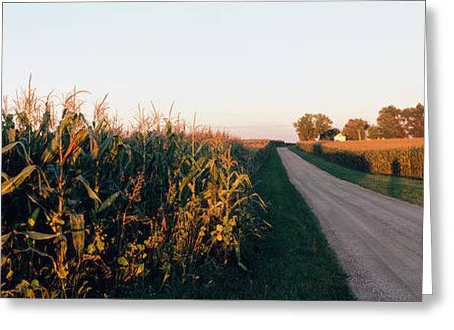 Illinois Barns Photographs Greeting Cards - Dirt Road Passing Through Fields Greeting Card by Panoramic Images