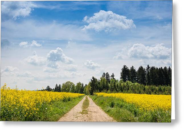 Farm Photography Greeting Cards - Dirt Road Passing Through Rapeseed Greeting Card by Panoramic Images