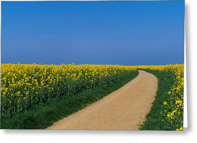 Dirt Image Greeting Cards - Dirt Road Running Through An Oilseed Greeting Card by Panoramic Images