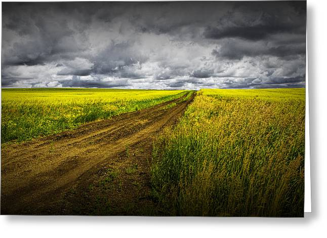 Alberta Prairie Landscape Greeting Cards - Dirt Road through a Canola Field Greeting Card by Randall Nyhof