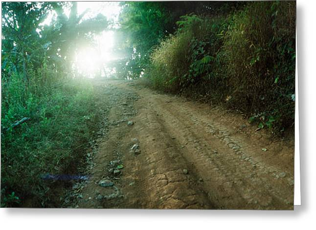 Chiang Mai Greeting Cards - Dirt Road Through A Forest, Chiang Mai Greeting Card by Panoramic Images