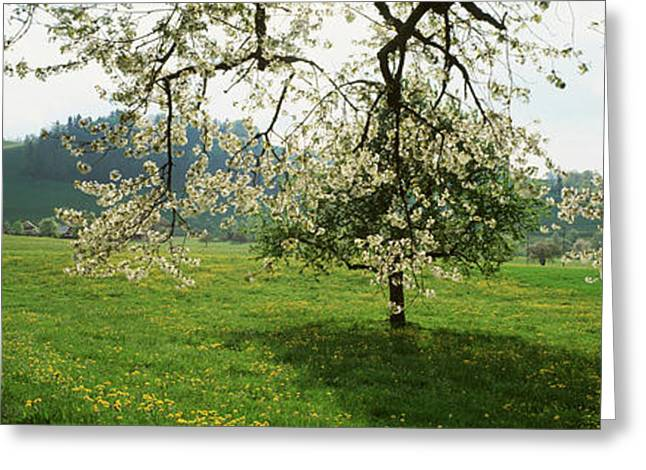 Zug Greeting Cards - Dirt Road Through Meadow Of Dandelions Greeting Card by Panoramic Images