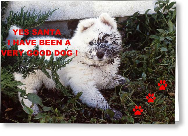 Recently Sold -  - Humorous Greeting Cards Greeting Cards - Dirty Dog Christmas Card Greeting Card by Ginny Barklow