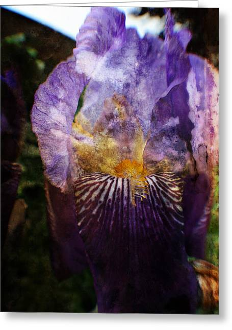 Garden Scene Mixed Media Greeting Cards - Dirty Flowers. Greeting Card by Michael Braham