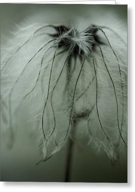 Dandelions Greeting Cards - Discarded Dreams Greeting Card by Shane Holsclaw
