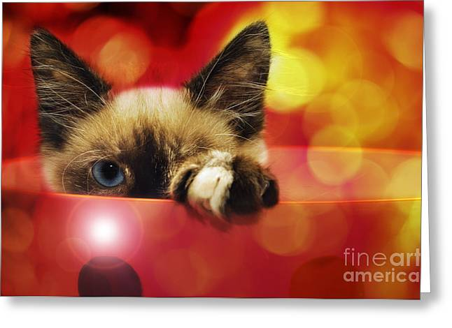 Puss Greeting Cards - Disco Kitty 1 Greeting Card by Andee Design