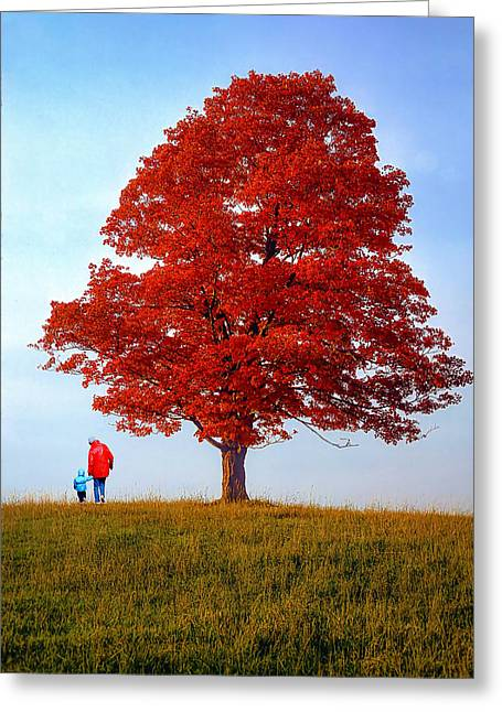 Sugar Maple Greeting Cards - Discovering Autumn Greeting Card by Steve Harrington