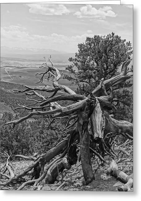 Disfigure Greeting Cards - Disfigured Tree Greeting Card by Dan Sproul