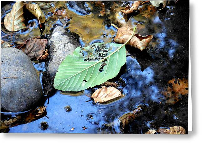 Reflection Of Trees In Stream Greeting Cards - Disintegrating Leaf Greeting Card by Chris Gudger