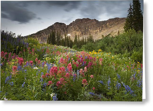 Little Cottonwood Canyon Greeting Cards - Display of Colors Greeting Card by Rory Wallwork