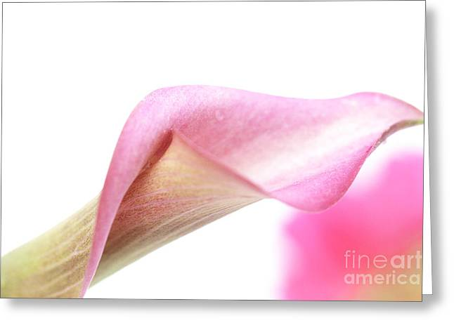 Pink Calla Lilies Greeting Cards - Dissolve  Greeting Card by Amanda Barcon