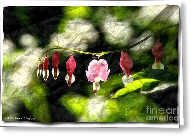 Flower Blossom Greeting Cards - Aglow Greeting Card by Susan Herber