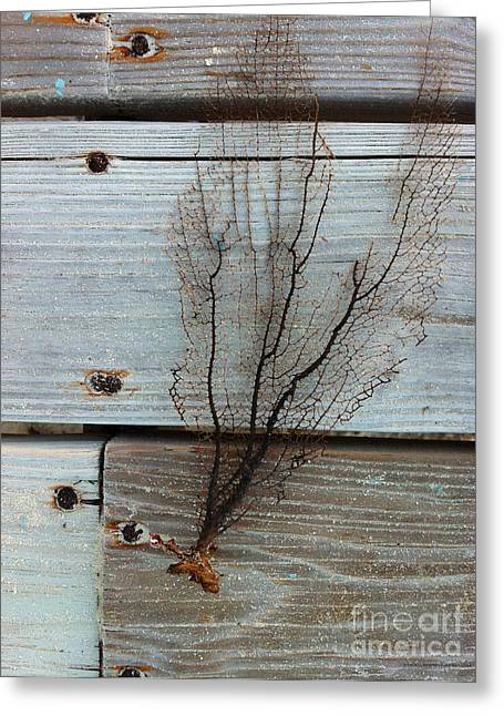 Sea Fan Greeting Cards - Distressed Sea Fan Greeting Card by Danielle  Perry