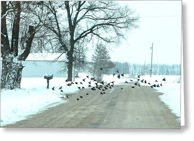 Rural Indiana Photographs Greeting Cards - Disturbing the Flock Greeting Card by Julie Dant