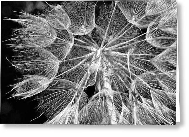 Lacy Floral Greeting Cards - Ditch Lace bw Greeting Card by Steve Harrington