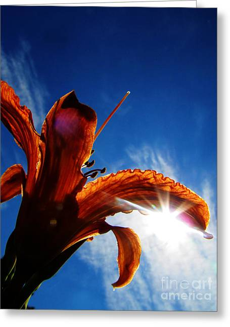 Upshot Greeting Cards - Ditch Lily Greeting Card by Ron  Tackett