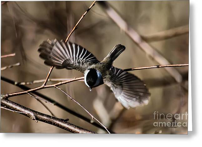 Black Birds Flying Greeting Cards - Dive Bomber Greeting Card by Lois Bryan