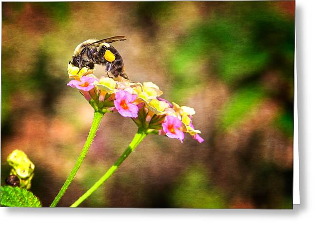 Dive Right In Honey Greeting Card by Mark Andrew Thomas
