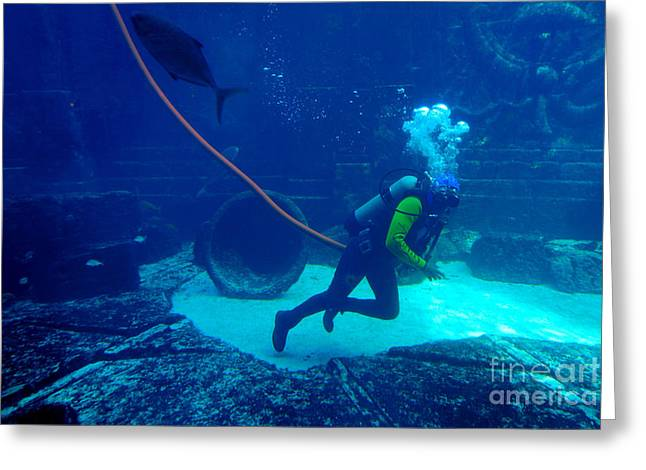 Bubble Greeting Cards - Diver at The Dig Aquarium Atlantis Resort Greeting Card by Amy Cicconi
