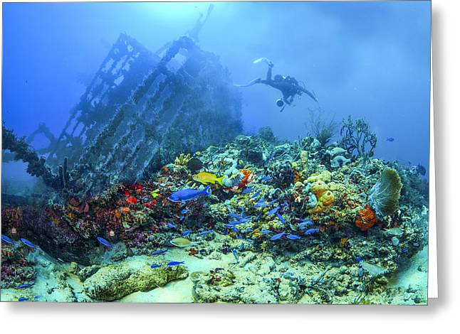 Boats In Water Greeting Cards - Diver at the Wreck Greeting Card by Debra and Dave Vanderlaan
