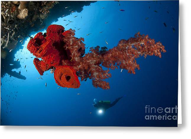 Water In Caves Greeting Cards - Diver Looks On At A Bright Red Soft Greeting Card by Steve Jones